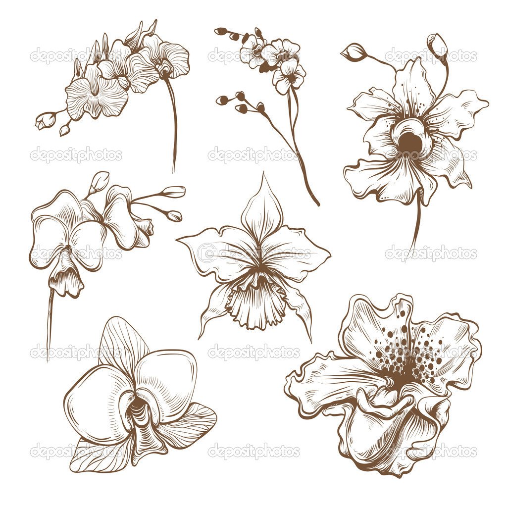 Orchid Flower Line Drawing : Orchid flower drawing at getdrawings free for