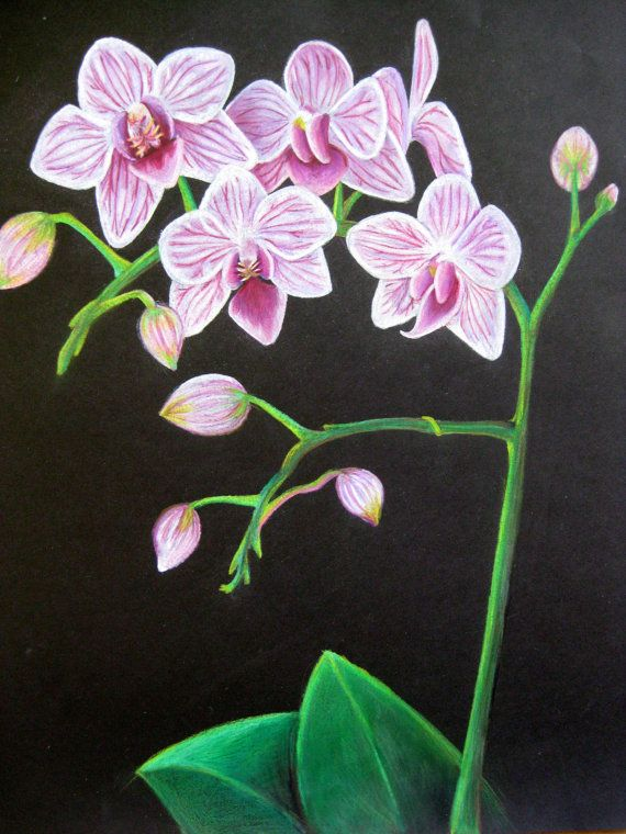 flower drawing with colored pencils flowers healthy