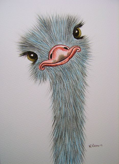 465x640 Silly Ostrich Watercolour Watercolor, Drawings And Drawing Ideas