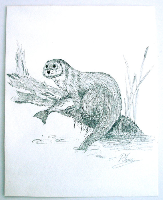 570x701 Vintage Pen And Ink Ooak Drawing Of An Otter Riverside Scene