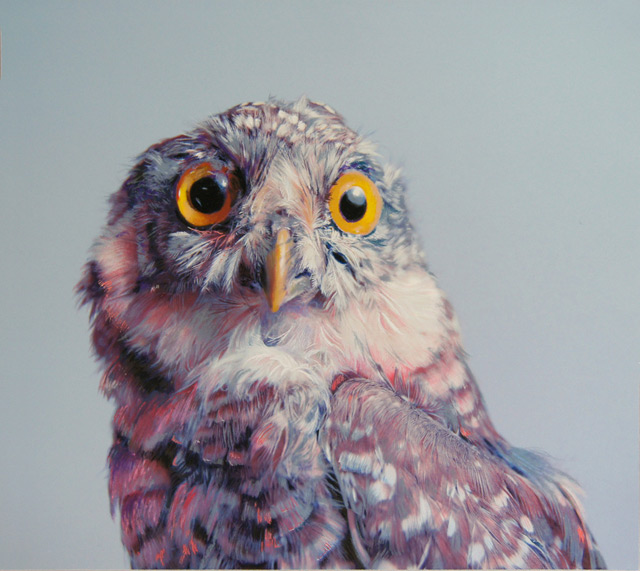 640x571 Colored Owl Drawings By John Pusateri Colossal