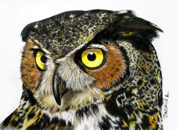 600x440 Colored Pencil Drawing Of An Owl By Jasminasusak