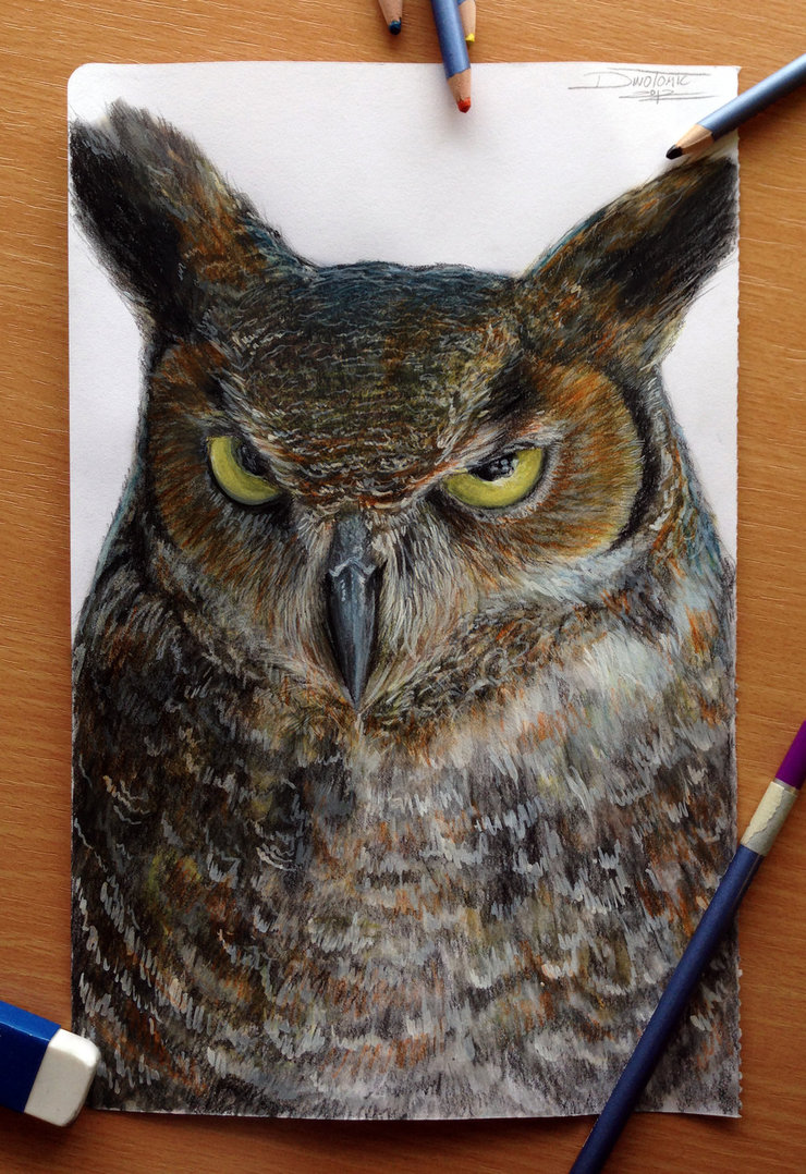 740x1078 Owl Color Pencil Drawing By Atomiccircus