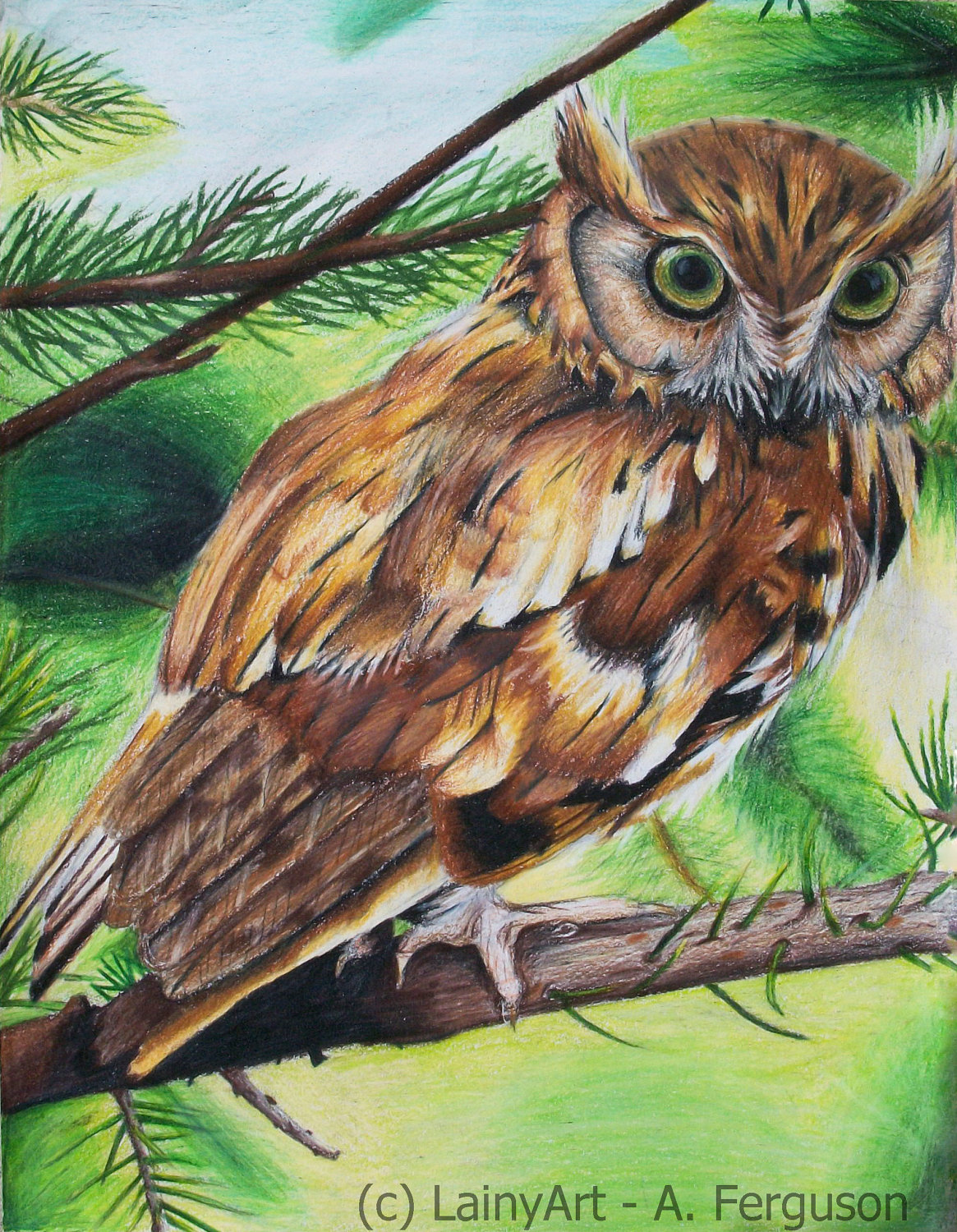 1165x1500 Owl Drawing 8x10 Stretched Canvas Print Ready To By Lainyart