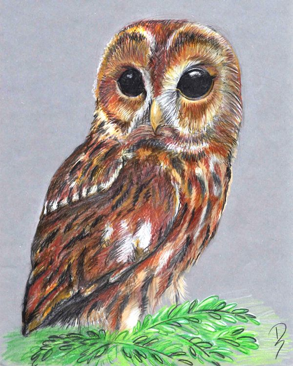 600x749 Owl Color Pencils By On @