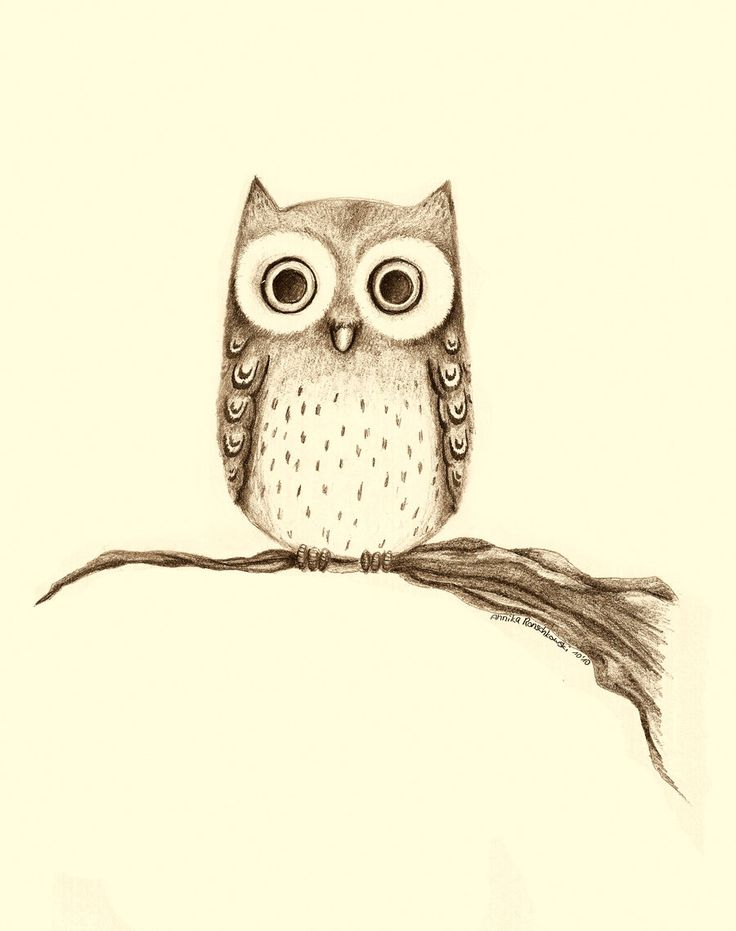 736x931 82 Best Owl Images On Barn Owls, Owls And Drawings Of Owls