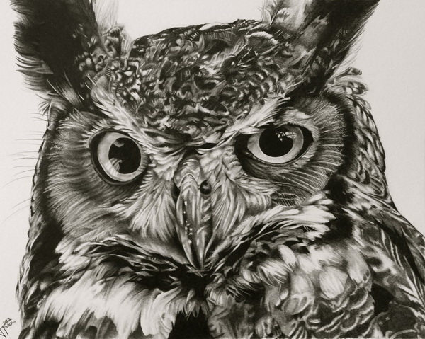 600x479 Clever Owl Drawings For Inspiration