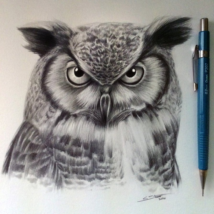 894x894 Owl Drawing By Lethalchris