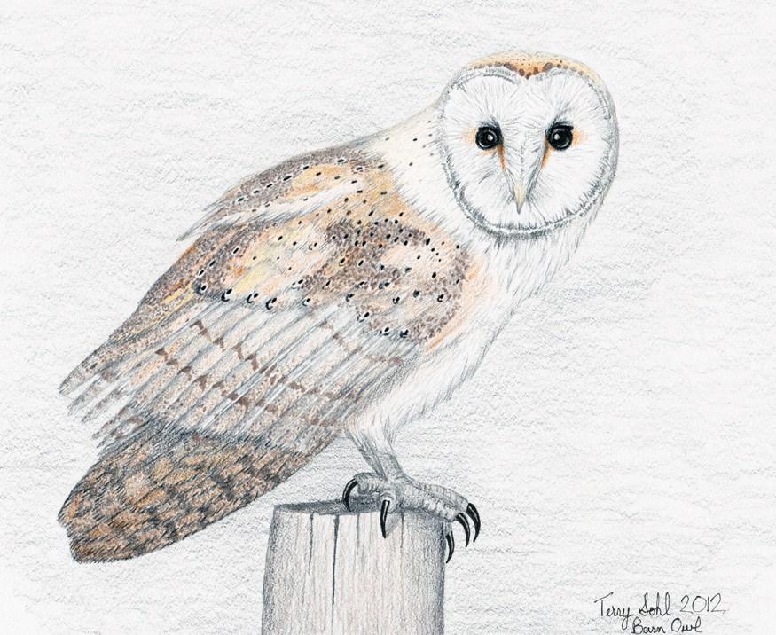 875x716 Superb Owl Sunday Drawn Owl Edition Dakota Birder