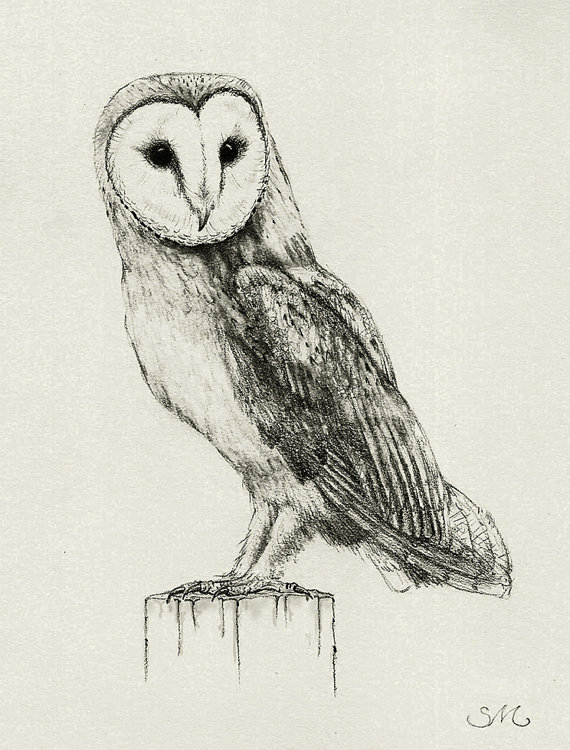 570x750 167 Barn Owl Drawing Card
