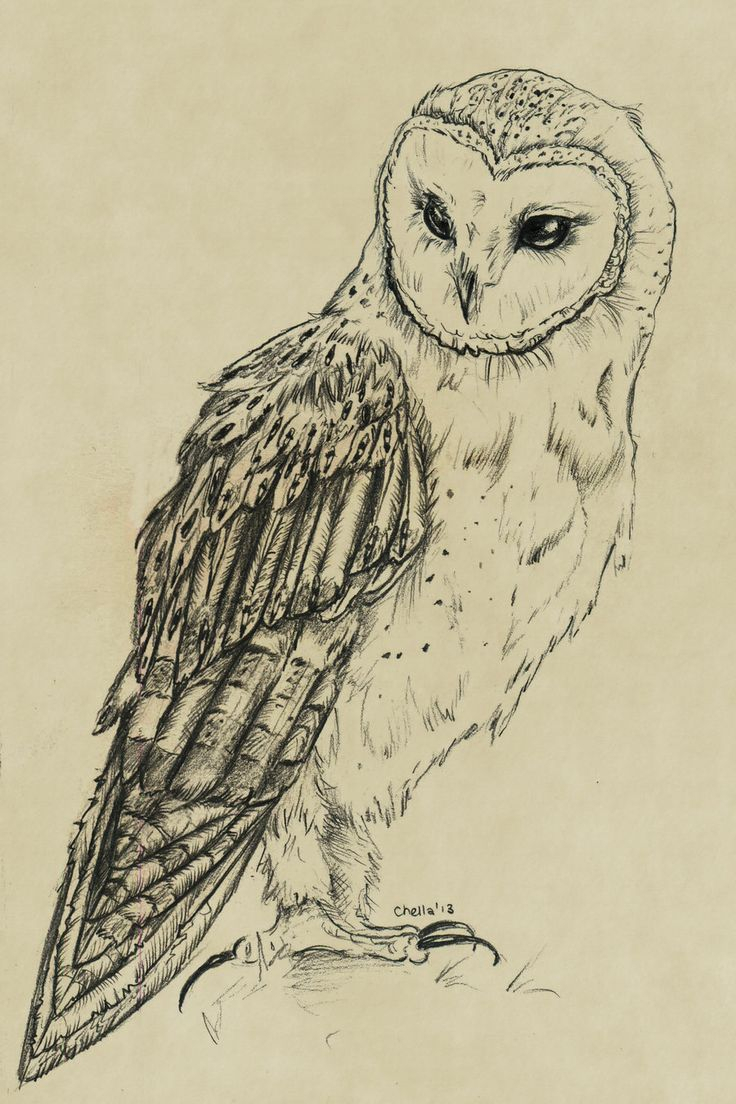 736x1104 A Drawing Of An Owl Best Owl Drawings Ideas On Owl