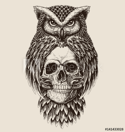 475x500 Elaborate Drawing Of Owl Holding Skull