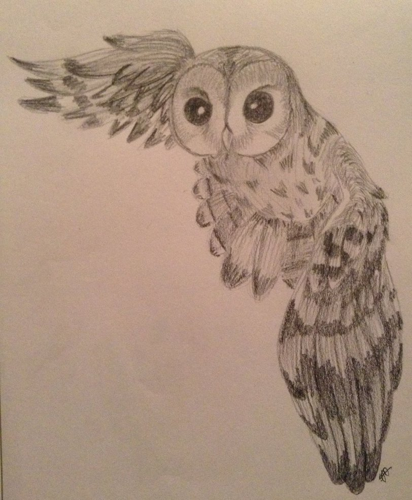 812x984 Owl Drawing By Csinorman