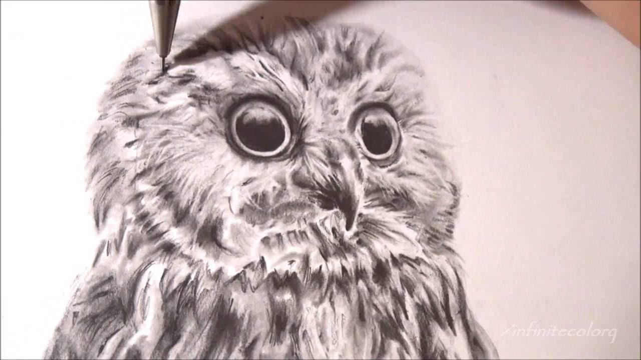 1280x720 Realistic Owl