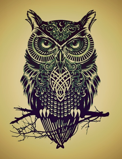 500x650 Owl Drawing Tumblr Discovered By Dee