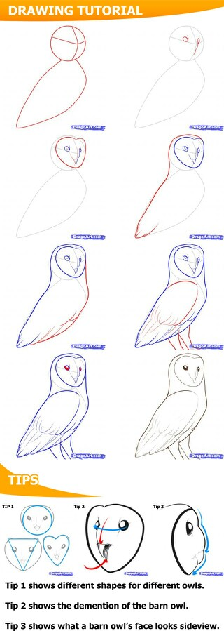 320x899 How To Draw An Owl Crafts Owl, Drawings And Sketches