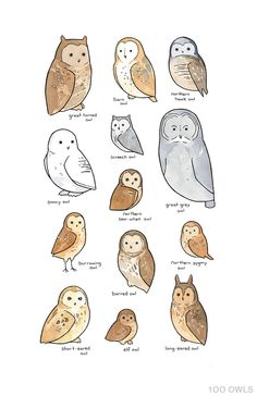 236x364 Lots Of Owls And Other Drawing On This Board How To Draw An Owl
