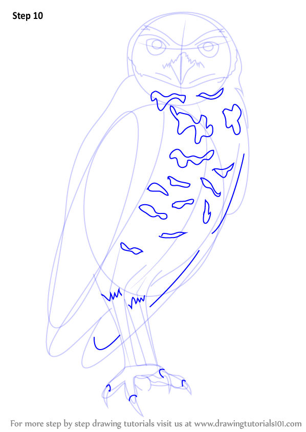 598x844 Learn How To Draw A Burrowing Owl (Birds) Step By Step Drawing