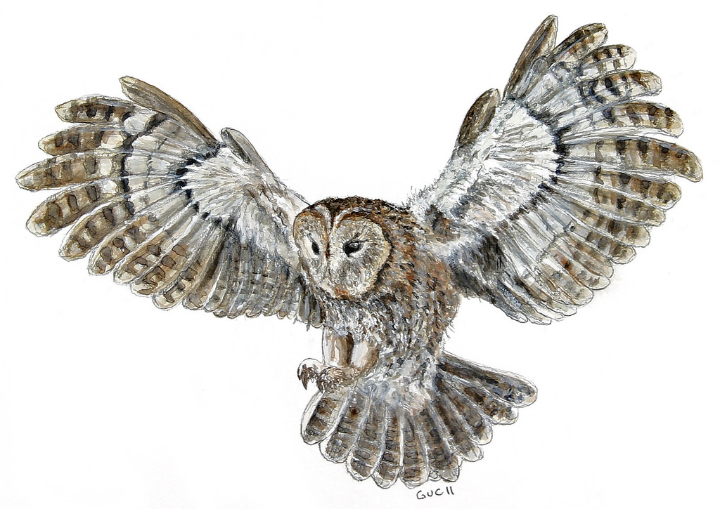 owl flying drawing at getdrawings com free for personal Cute Owl Clip Art Free Fall Owl Clip Art Free