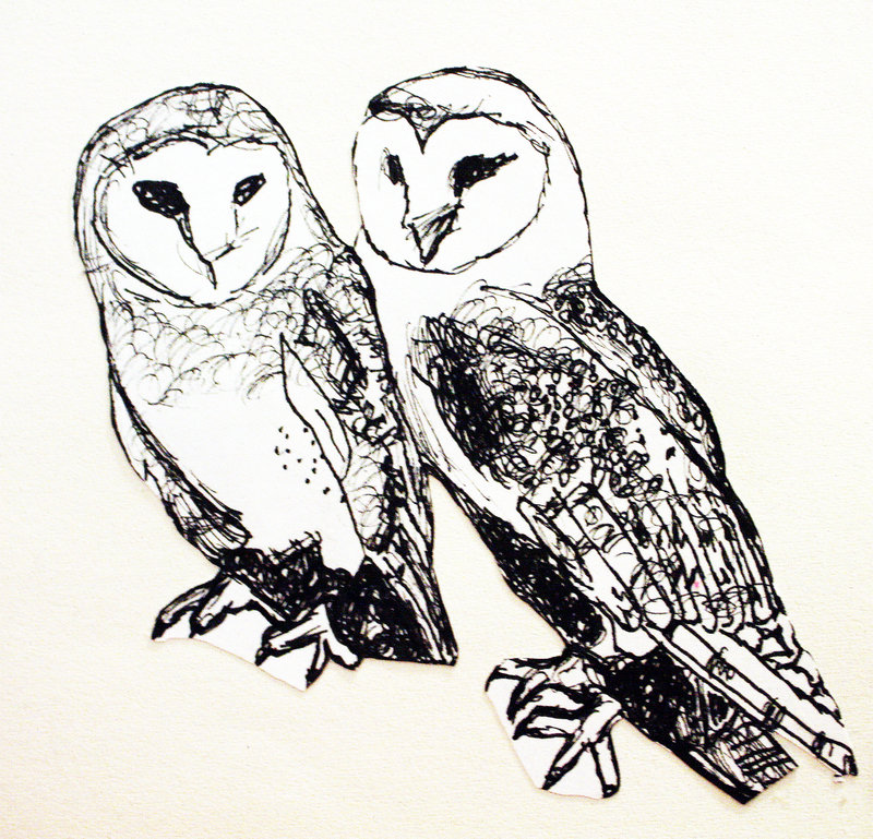 800x769 barn owl drawing in pen by silvershadow17 on deviantart