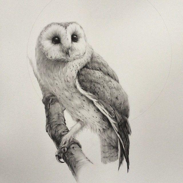 640x640 Gallery Barn Owl Drawing Pencil,