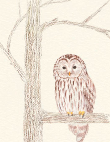 356x459 How To Draw An Owl In Colored Pencil