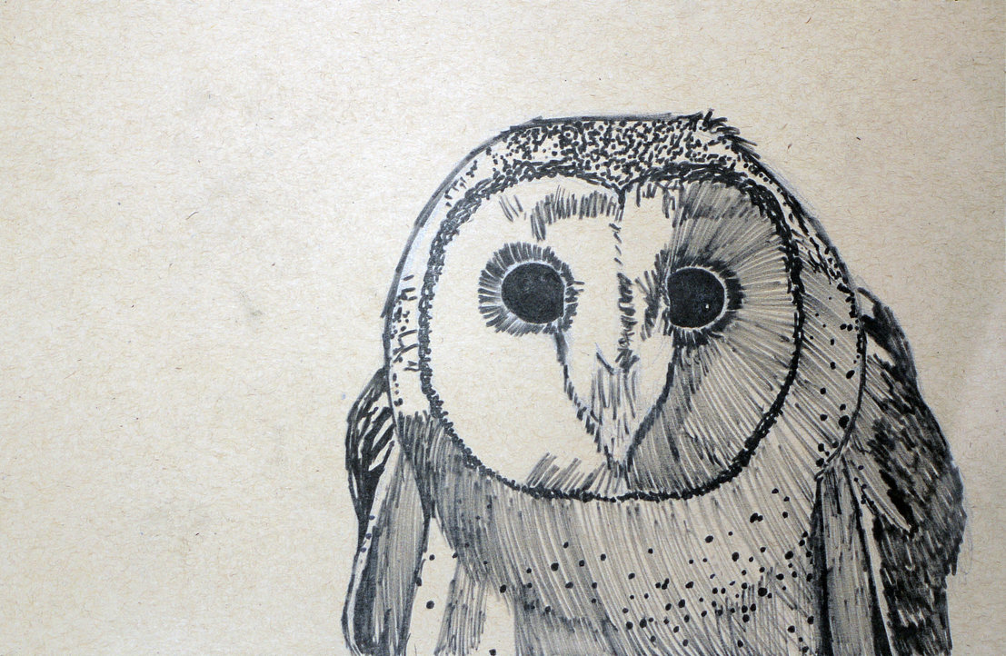 1107x722 Masked Owl Drawing By Marchio08