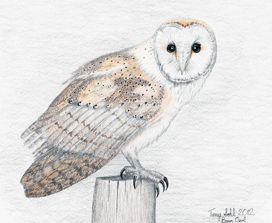 875x716 Owl