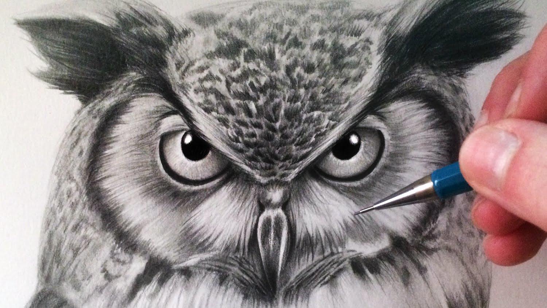 1500x844 Owl Drawing Elaxsir