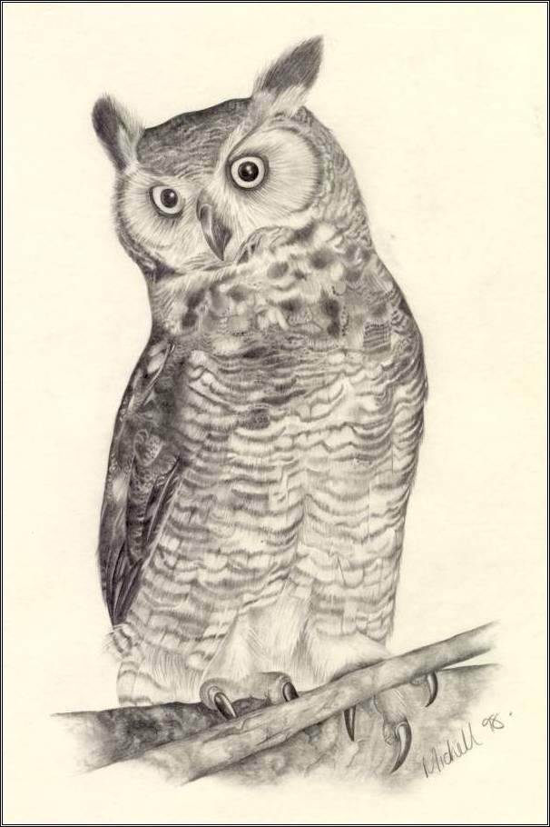 606x910 Owl Drawing ~ 3d Drawing