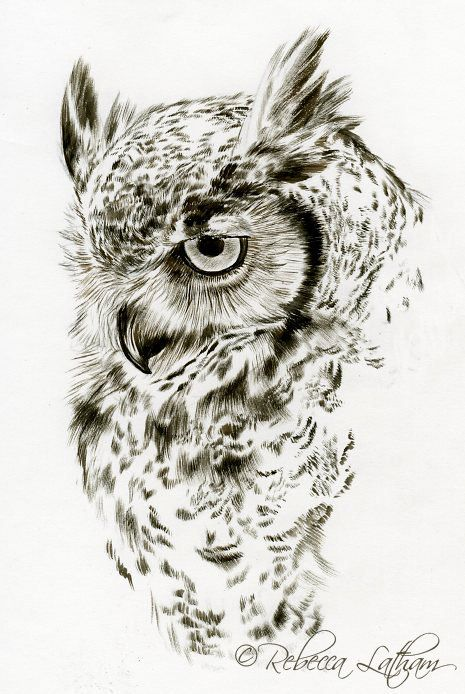 465x694 Photos Owl Pictures Drawings,