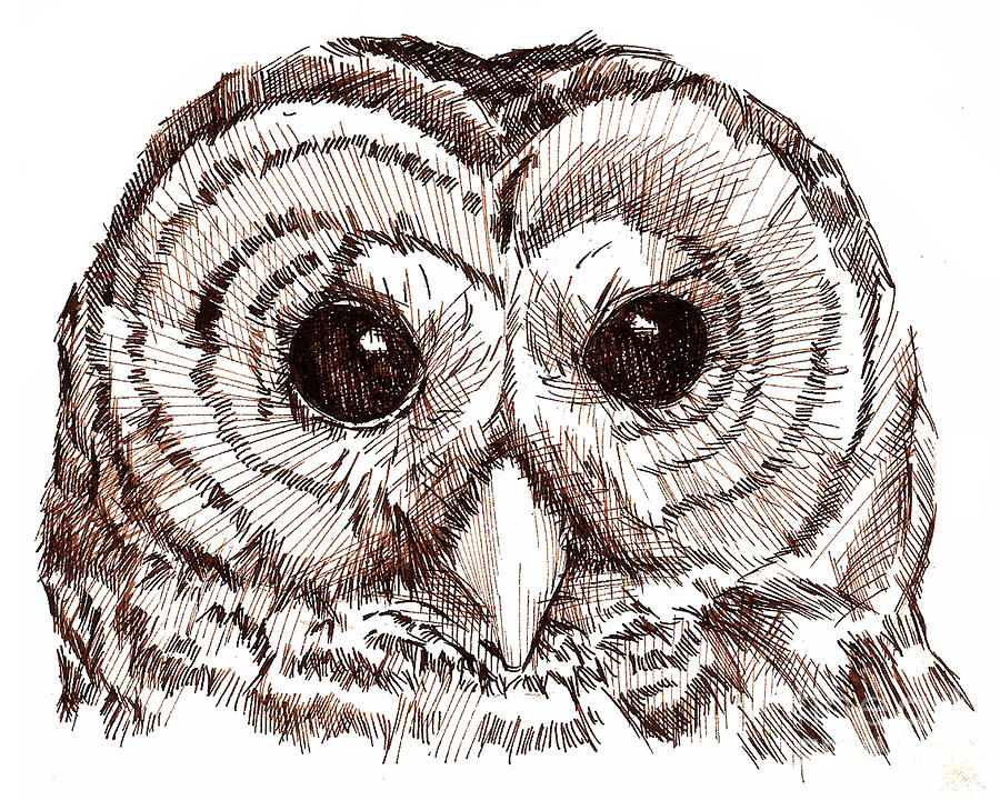 900x720 Sepia Pen And Ink Owl Drawing Drawing By Heather Davis