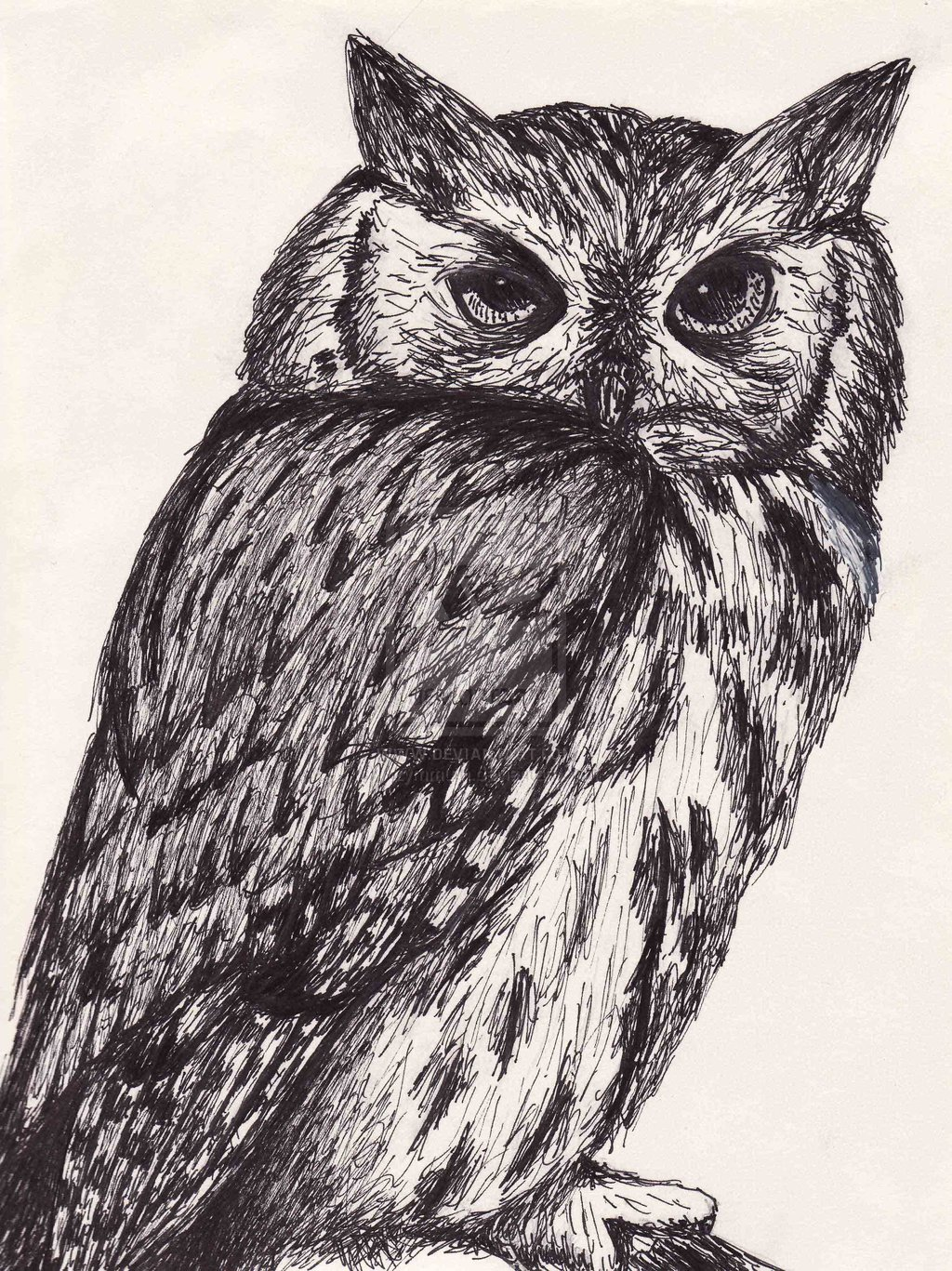1024x1367 Animal Ink Drawings Pen And Ink Drawings Of Animals Pen And Ink