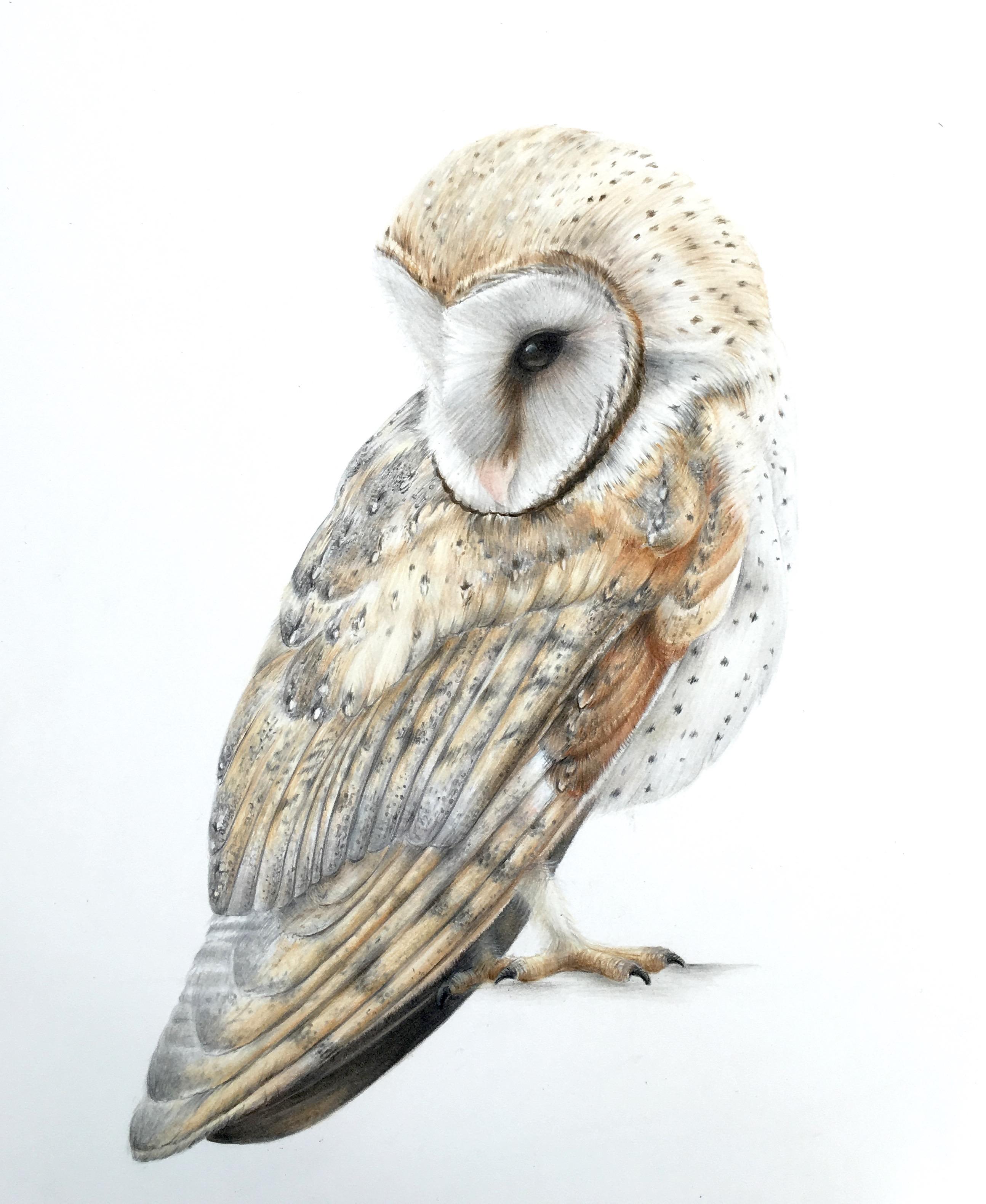 Owl Pencil Drawing at GetDrawings | Free download