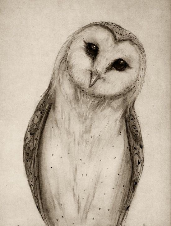 550x728 Barn Owl Sketch Art Print Dekoupage Ptaki Owl