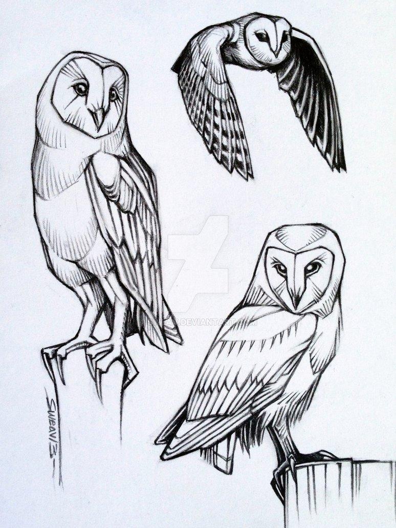 774x1031 Barn Owl Studies By Sweav