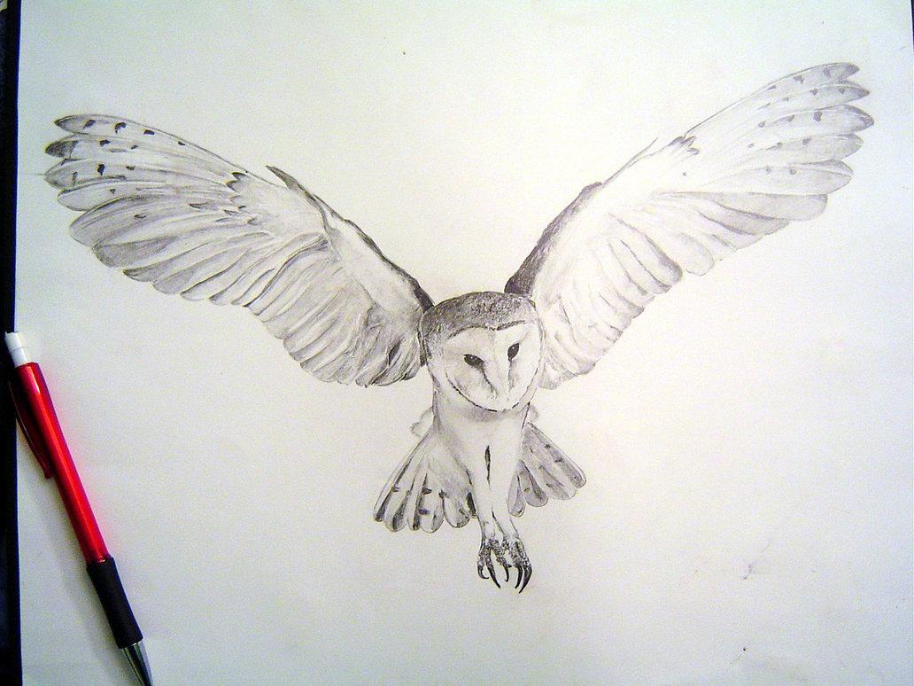 1032x774 Owl In Flight Drawing Best Ideas About Owl Drawings