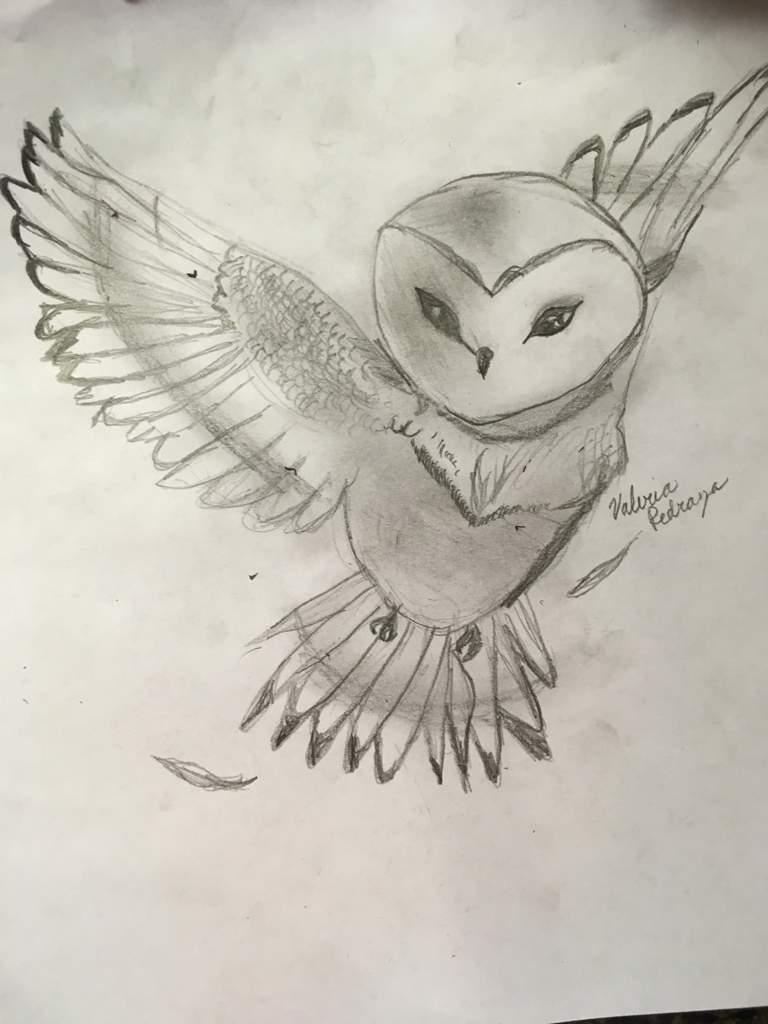 768x1024 Owl Sketch Harry Potter Amino