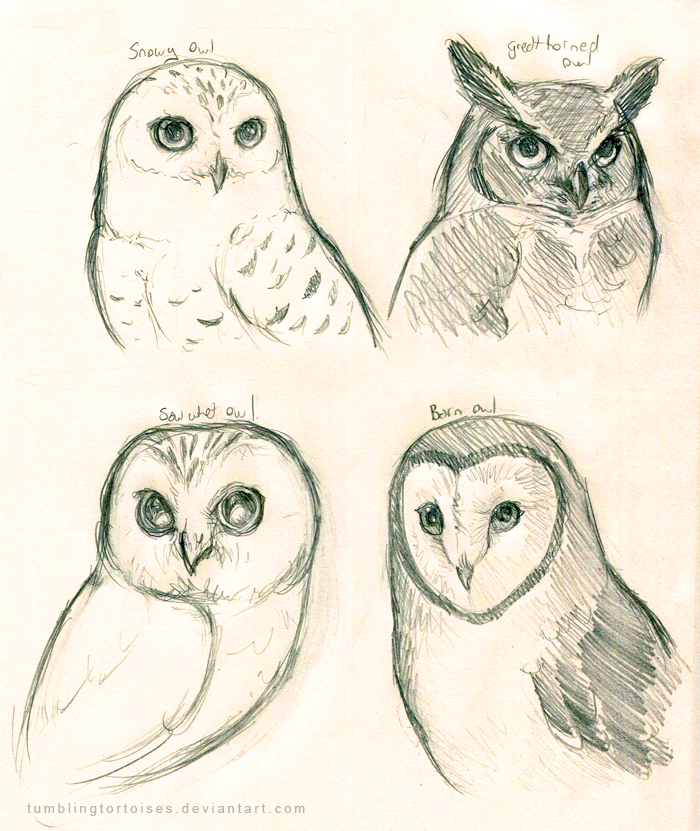 700x831 Owls Preliminary Sketch By Tumblingtortoises On Owls