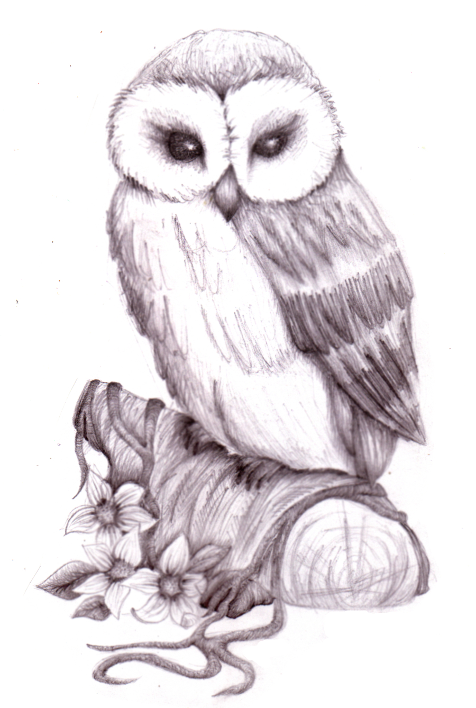 900x1338 Pencil Sketch Of Owl Images Owl Sketch