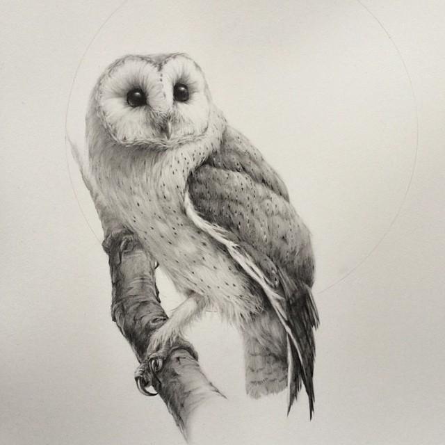 640x640 Absolutely Stunning Barn Owl Drawing From Artist Vanessa Foley