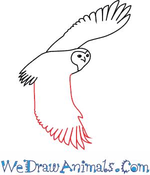 300x350 How To Draw A Snowy Owl