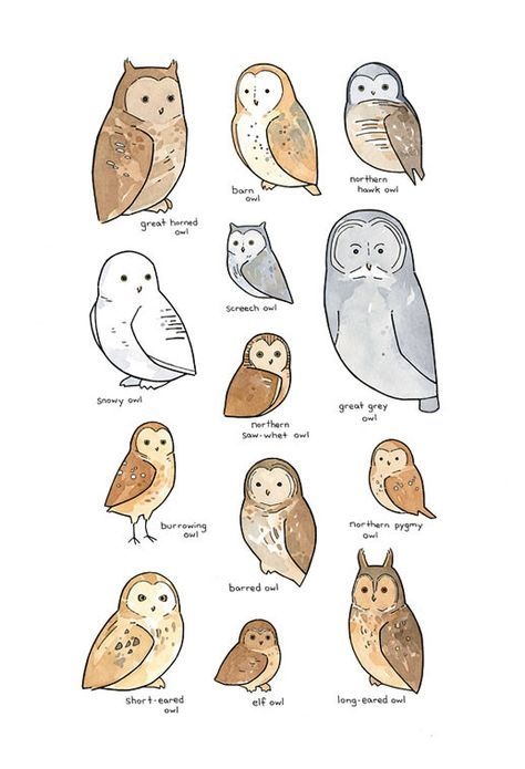 474x695 Owls Of North America Illustrated Chart