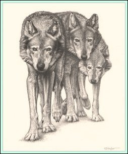 254x304 The Pack'