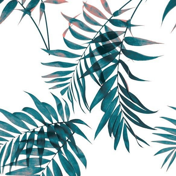 583x583 Palm Fronds Sketches Drawings Illustrations