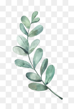 260x380 Palm Leaves Png And Psd Free Download