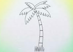 300x217 How To Draw Palm Tree Archives