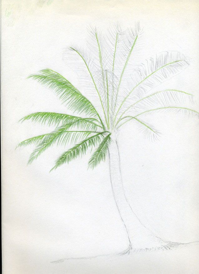 638x878 Let's Draw Palm Trees. Great Guide. Easy To Follow Process. Art