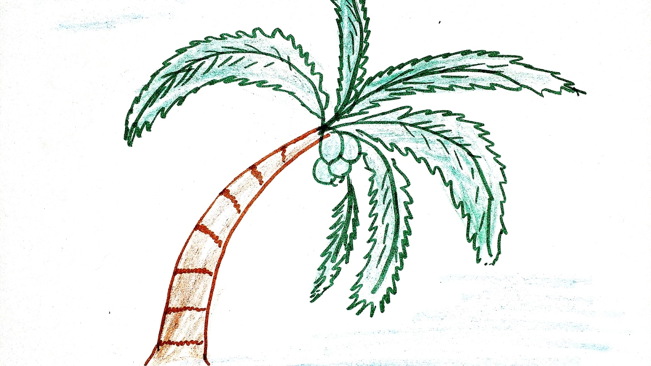 1280x720 Simple Palm Tree Drawing How To Draw Simple Coconut Tree
