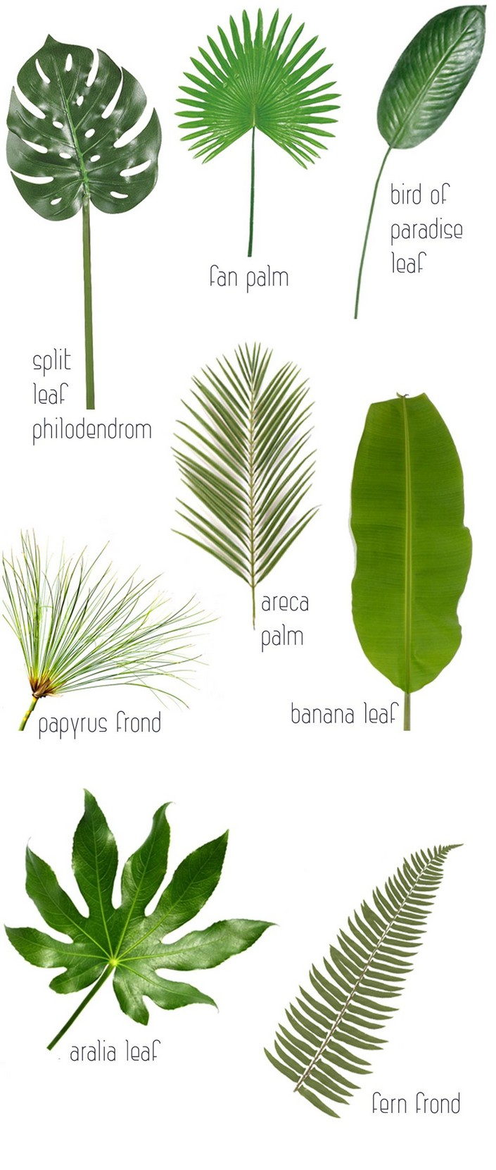 Palm Frond Drawing at GetDrawings.com | Free for personal use Palm ...